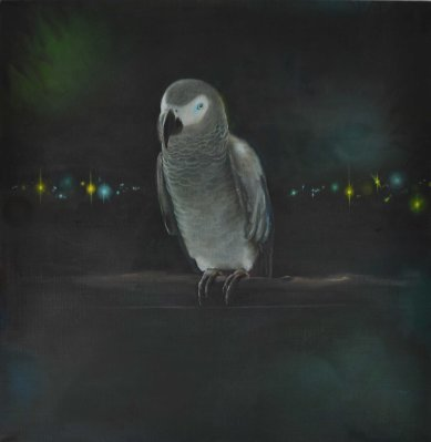 Arfrican Grey Parrot 01