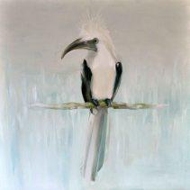 White Hornbill 01