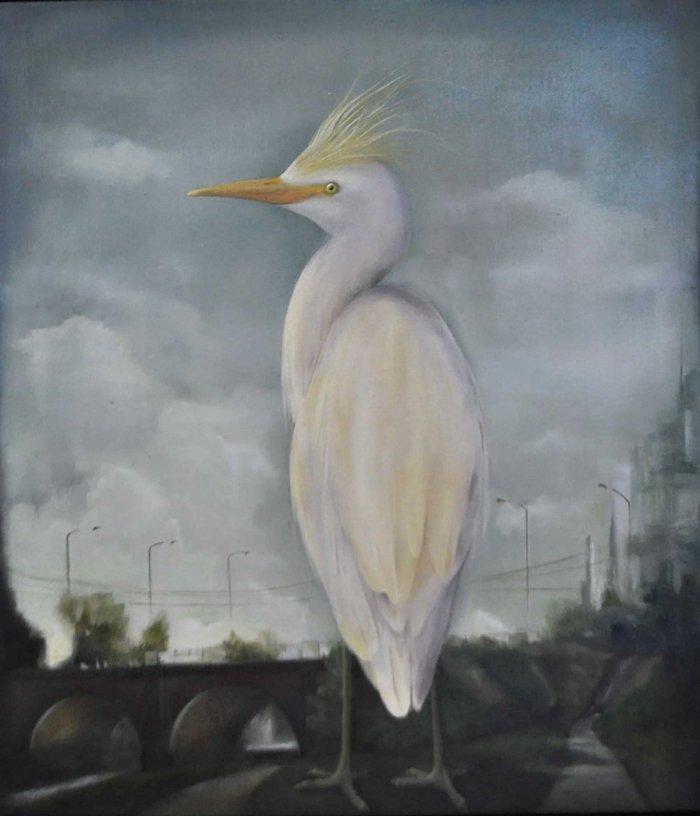 Cattle Heron 02
