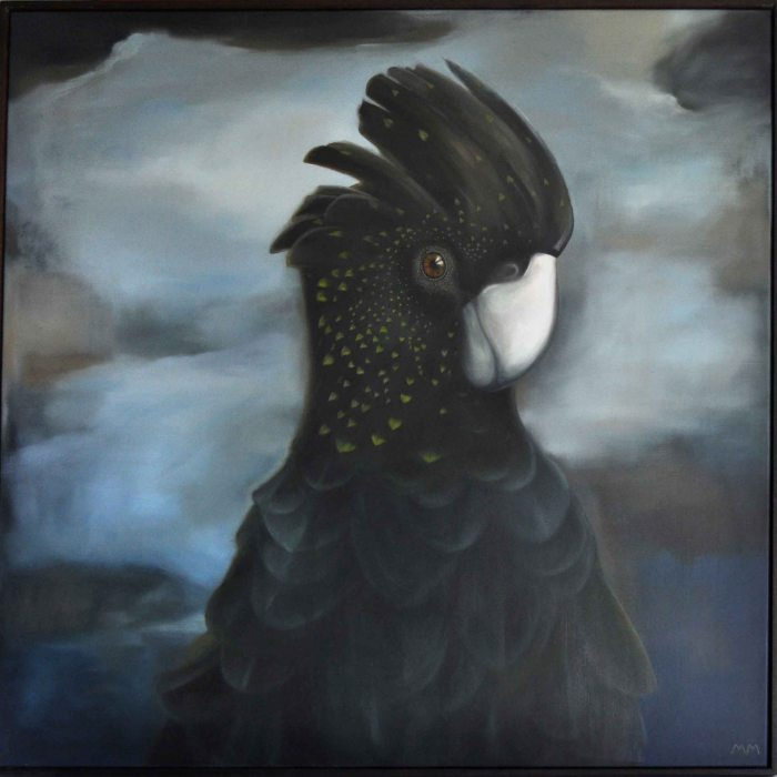 Red Tailed Black Cockatoo Final 01