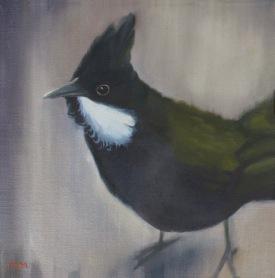 modern ornithology
