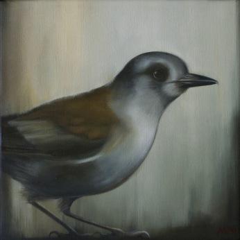grey-shrike-thrush-01